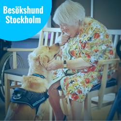 13/2 Besökshund Stockholm
